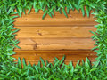 Frame of Green Grass on Wood Royalty Free Stock Images