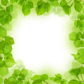 Frame of green leaves, foliage background Stock Photos
