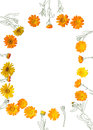 Frame of herb calendula