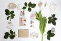 Frame from the leaves of roses and shells on white background. Memory of summer Royalty Free Stock Photo
