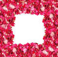 Frame made of petals Royalty Free Stock Images