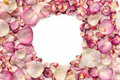 Frame made of pink rose petals Royalty Free Stock Photo