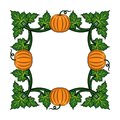 Frame with orange pumpkins and green leaves. Floral vector illustration.