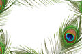 Frame of peacock feather eye Royalty Free Stock Photo