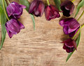 Frame for photo from fresh violet tulips