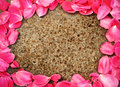 Frame of rose petal on metal Stock Images