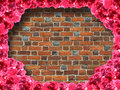 Frame from roses and from red brick wall background the Stock Photo
