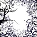 Frame from silhouettes of bare branches of trees on white background Stock Images