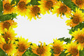 Frame with sunflowers on a white background Royalty Free Stock Photos