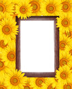 Frame surrounded by sunflower. Royalty Free Stock Images