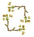 Frame of tree branch with new leaves Royalty Free Stock Photography