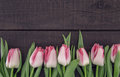 Frame of tulips on dark rustic wooden background with copy space