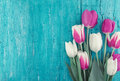 Frame of tulips on turquoise rustic wooden background. Spring flowers. Greeting card for Valentine`s Day, Woman`s Day and Mother`s Royalty Free Stock Photo