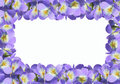 Frame from violet viola Royalty Free Stock Images