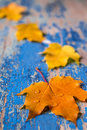 Frame from vivid colorful autumn leaves on the grunge wooden cyan desk