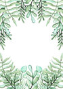 Frame With Watercolor Green Ferns And Herbs