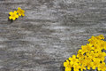 Frame of yellow flowers on a wood background Royalty Free Stock Photo