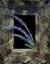 Framed Lavender Royalty Free Stock Photo