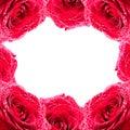 Framework from roses Royalty Free Stock Photos