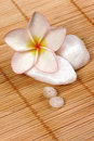Frangipane flower and pebbles on the rattan background Stock Image