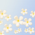 Frangipani design collage on blue background Royalty Free Stock Image