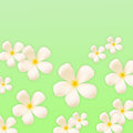 Frangipani design collage on green background Stock Photos