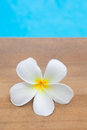 Frangipani flower beauty in the nature from Royalty Free Stock Photo