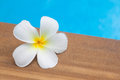 Frangipani flower beauty in the nature from Royalty Free Stock Photography