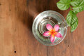 Frangipani flower on a cup full of water wooden table Stock Photos