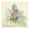 Frangipani flower plumeria watercolor style Royalty Free Stock Image