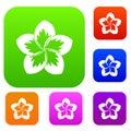 Frangipani flower set collection