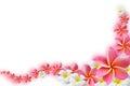 Keře květiny