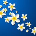 Frangipani flowers illustration on blue background Stock Photo