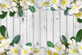 Frangipani flowers and leaf frame on white wood floor background Royalty Free Stock Photo