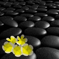 Frangipani flowers stones spa adv others purpose use Royalty Free Stock Image