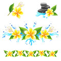 Frangipani flowers with water splashes Stock Images