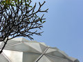 Frangipani and glasshouse roof or pagoda tree or temple tree Royalty Free Stock Photos