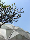 Frangipani and glasshouse roof or pagoda tree or temple tree Stock Photos