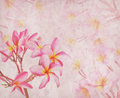 Frangipani or plumeria tropical flower with old grunge antique paper texture Royalty Free Stock Photography
