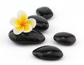 Frangipani with spa stones Royalty Free Stock Photography