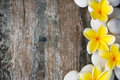 Frangipani and stones flowers on wood background Royalty Free Stock Photo