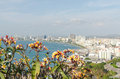 Frangipani with a view of the city pataya thailand Royalty Free Stock Images