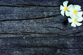 Frangipani on wood Stock Photo