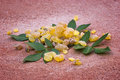 Frankincense Boswellia Papyrifera, resin and leaves, Incense f Royalty Free Stock Photo