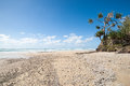 Fraser island beach beautiful long beach lined by the bush and sea Stock Photo