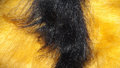 Freaky hair Royalty Free Stock Photo