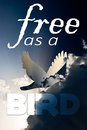 Free as a bird concept quote illustration on blue sky background Stock Images
