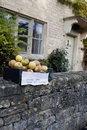 Free Autumn Cooking Apples sat on cotswold stone  Royalty Free Stock Image