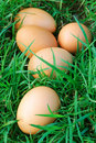 Free range eggs Royalty Free Stock Photos