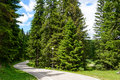 Free Road among Beautiful Forest in the National Park Durmitor, Royalty Free Stock Photo